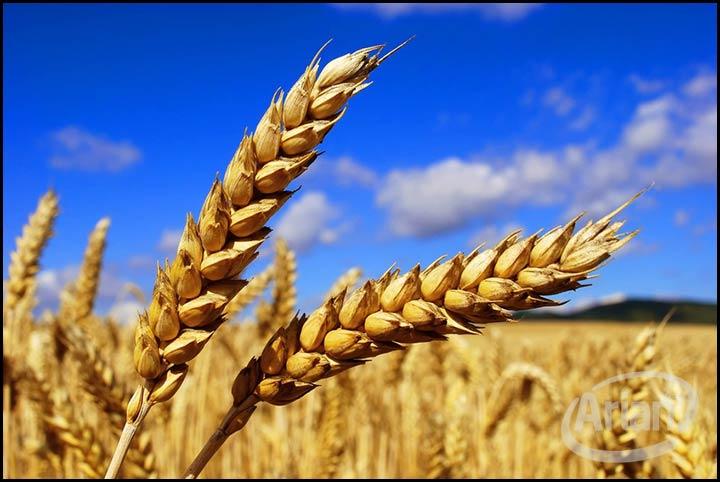 شرکت سهامی زراعی گلپایگان | آرین سیستم